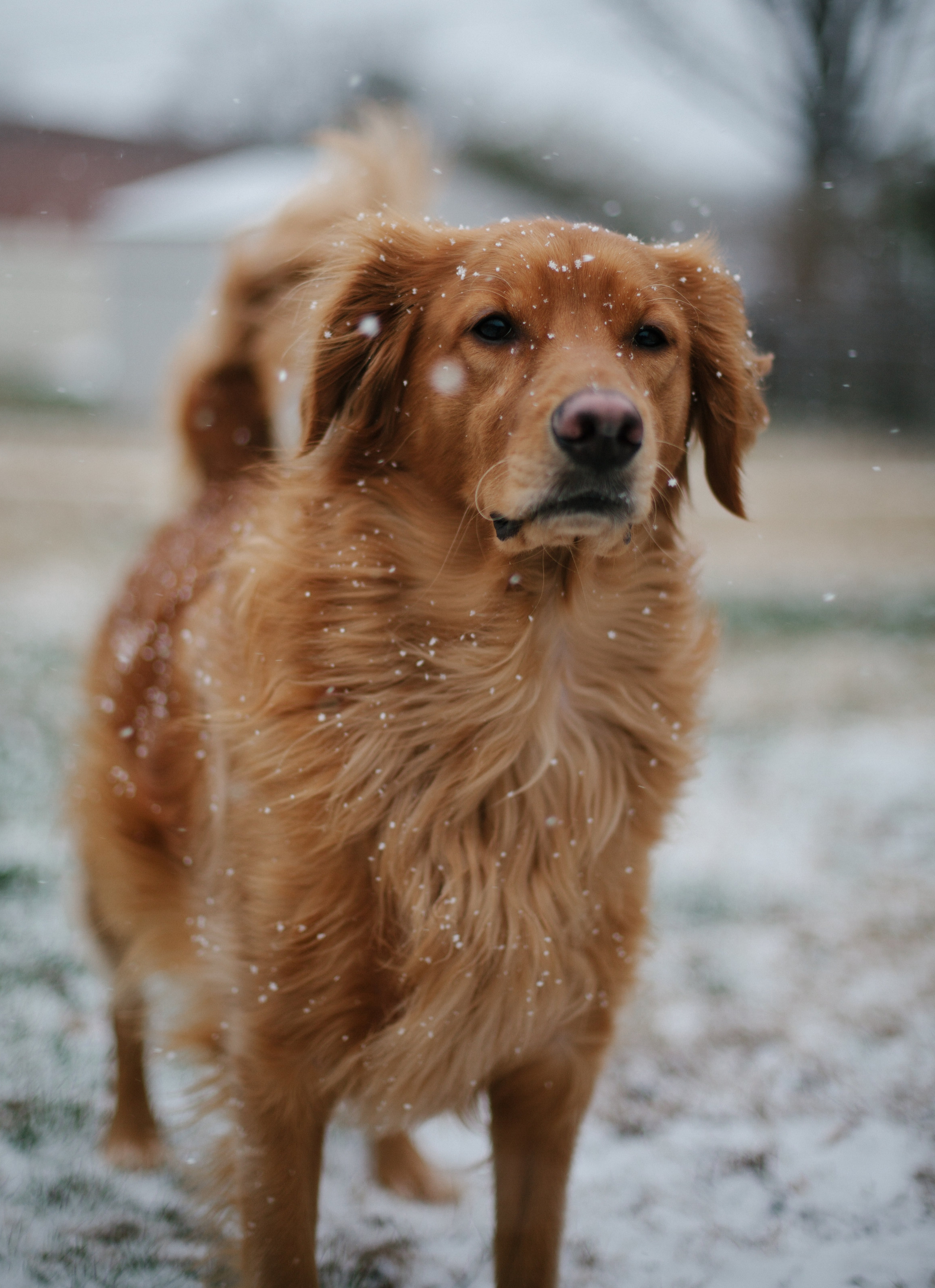 - Our sweet pup, PJ, in the snow in our backyard.
