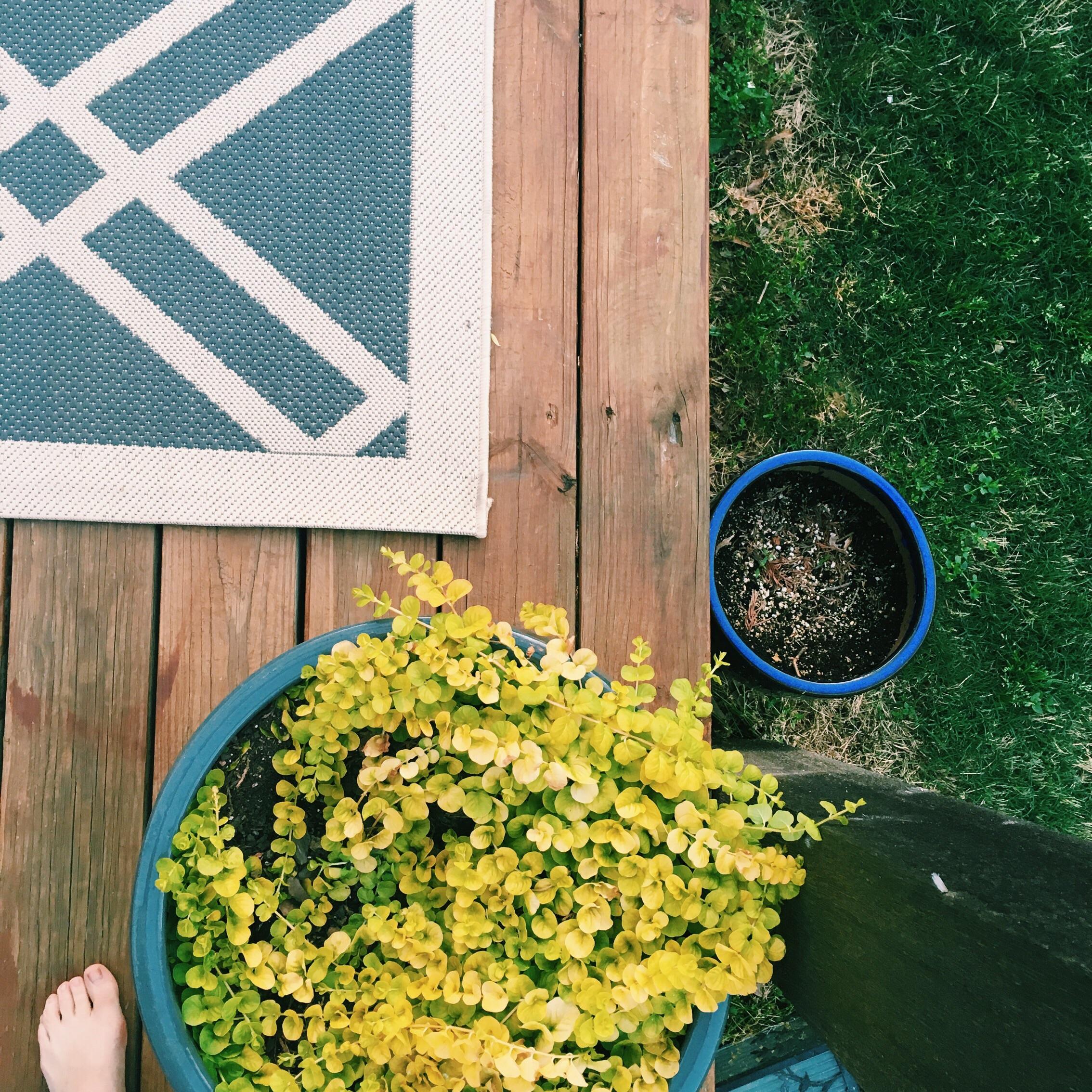 Thesmaller pot is true evidence of my gardening skills.