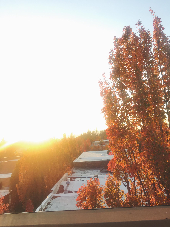 Photo Oct 16, 5 56 28 PM.jpg