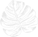 Monstera Leaf homepage-100.jpg