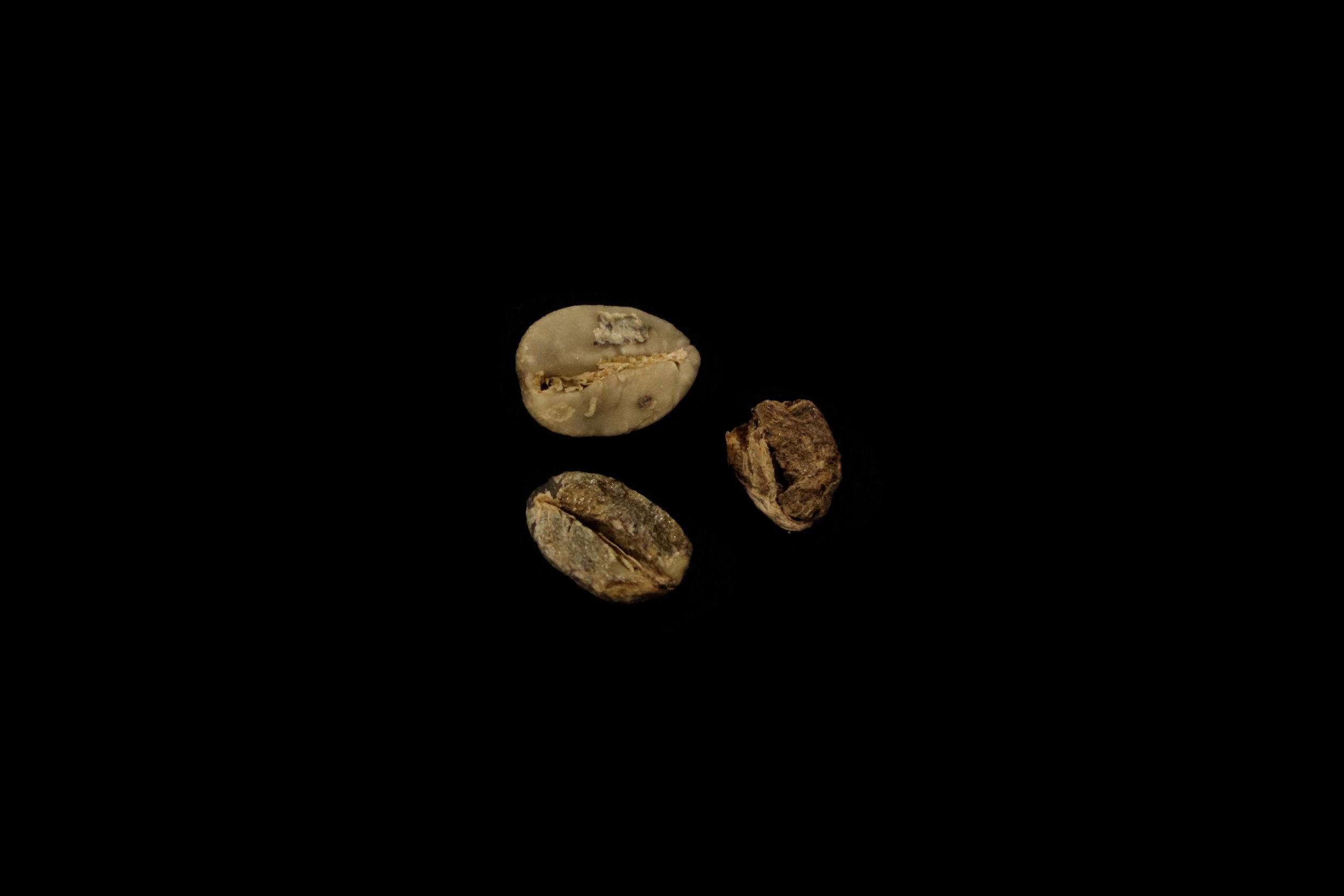 Moldy beans