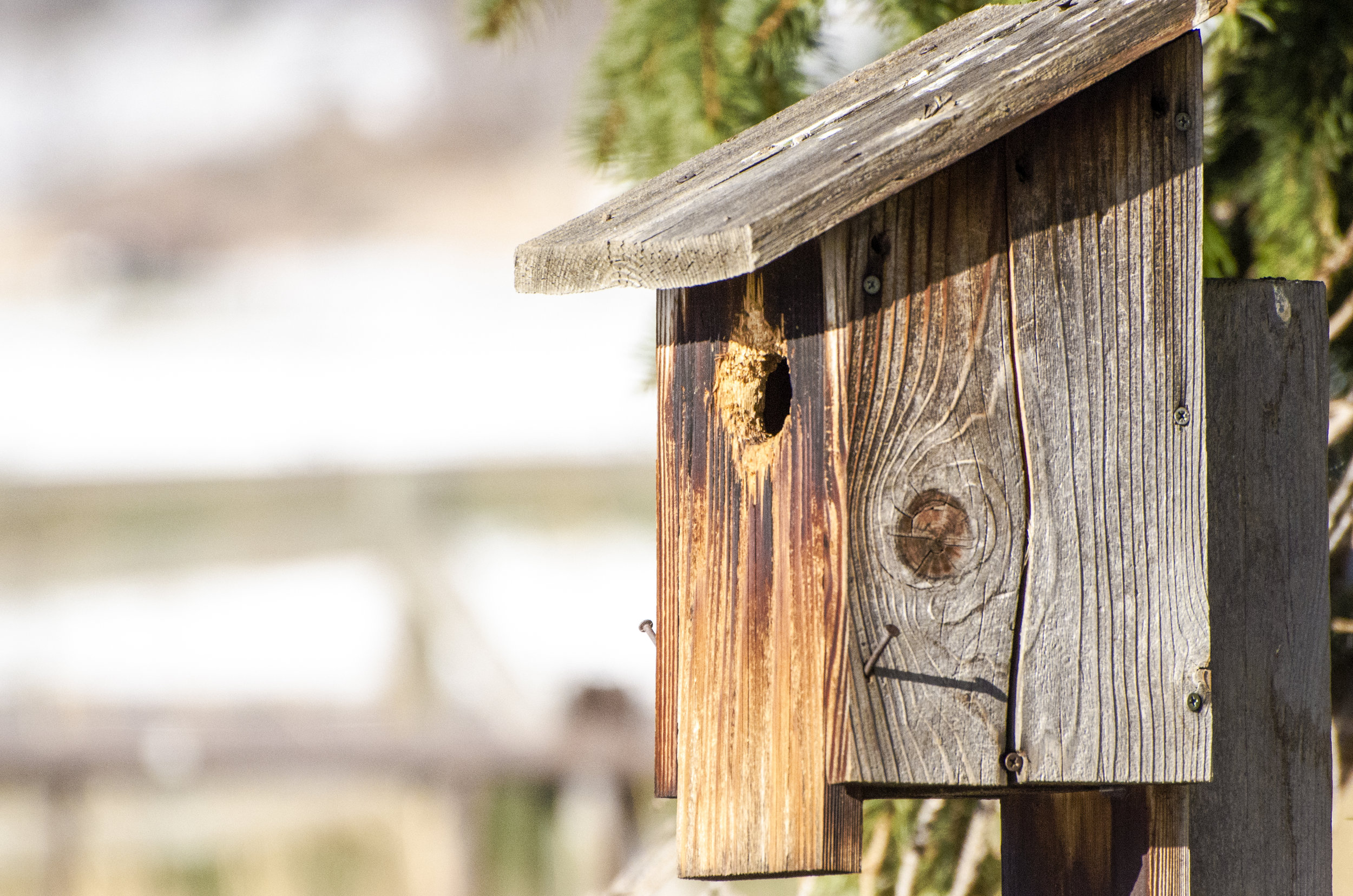One of the 250 bluebird houses Mickey installed to brighten up the area around Bell Mountain Ranch.