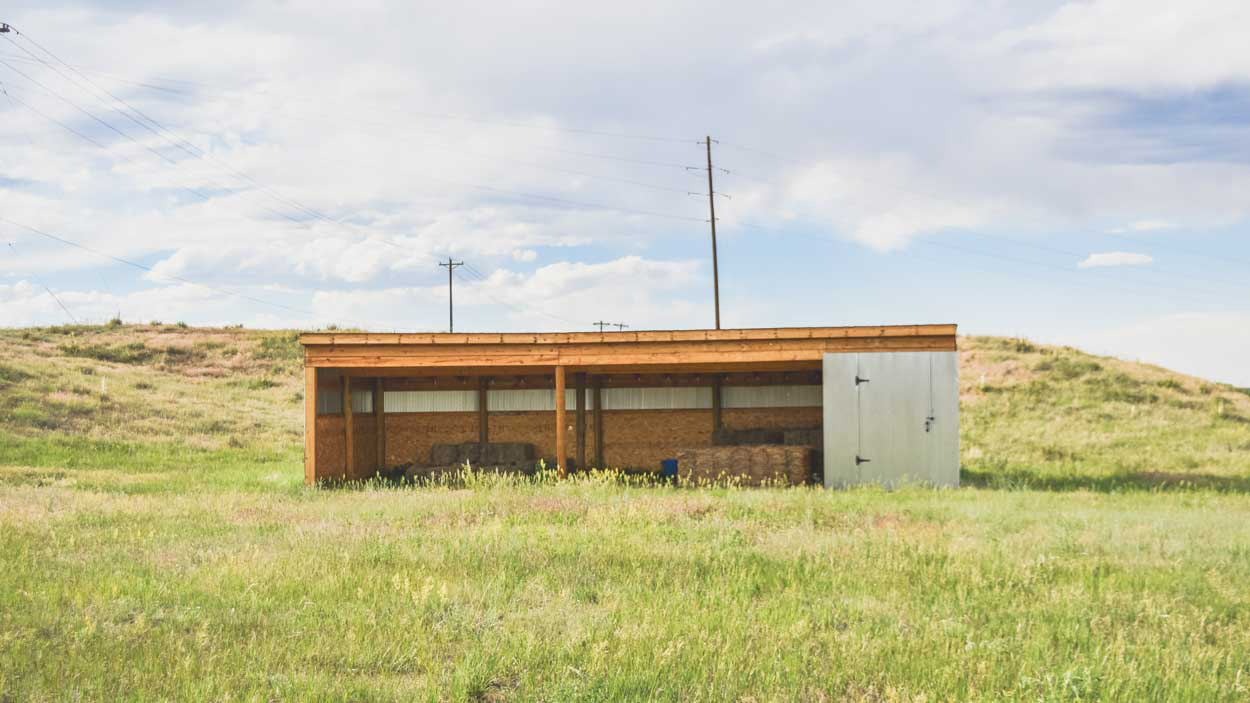 Pasture_with-shed-close-up.jpg