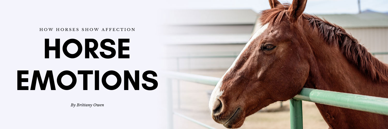 Horse-Emotions-Header-82019.jpg