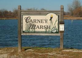 Carney Marsh.jpg
