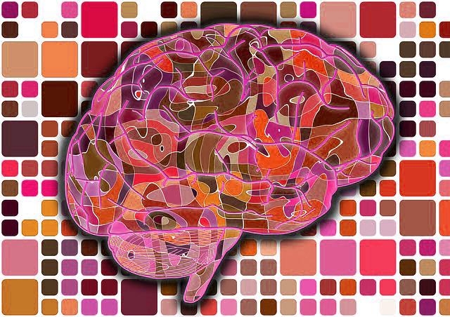 brain-951871_640.jpg