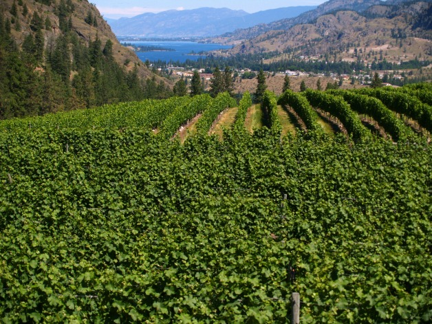 Okanagan-Valley_7429.jpg