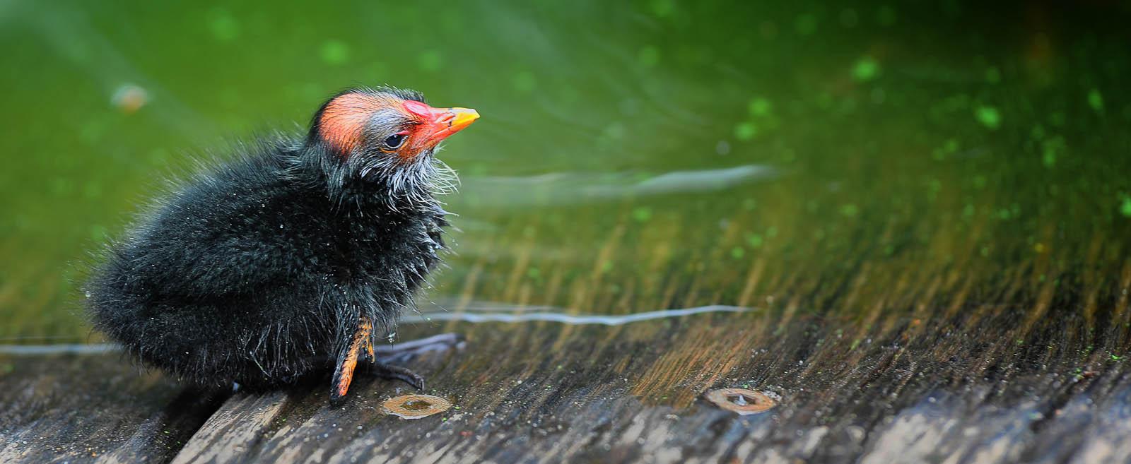 Botanic gardens bird.jpg