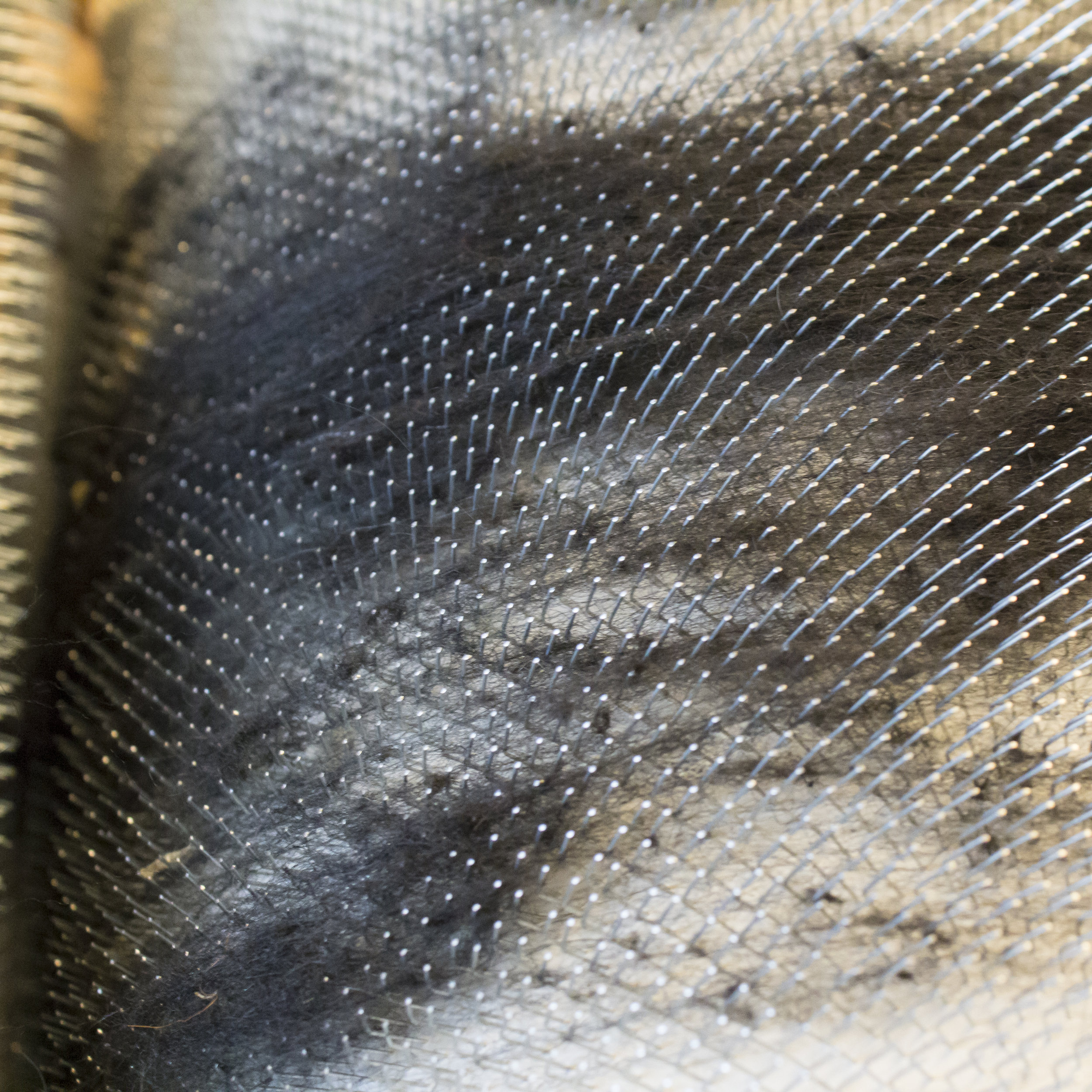 Use a dark or grey wool to break in a brand new drum carder or carding cloth. Not an issue if you obtain a used one.