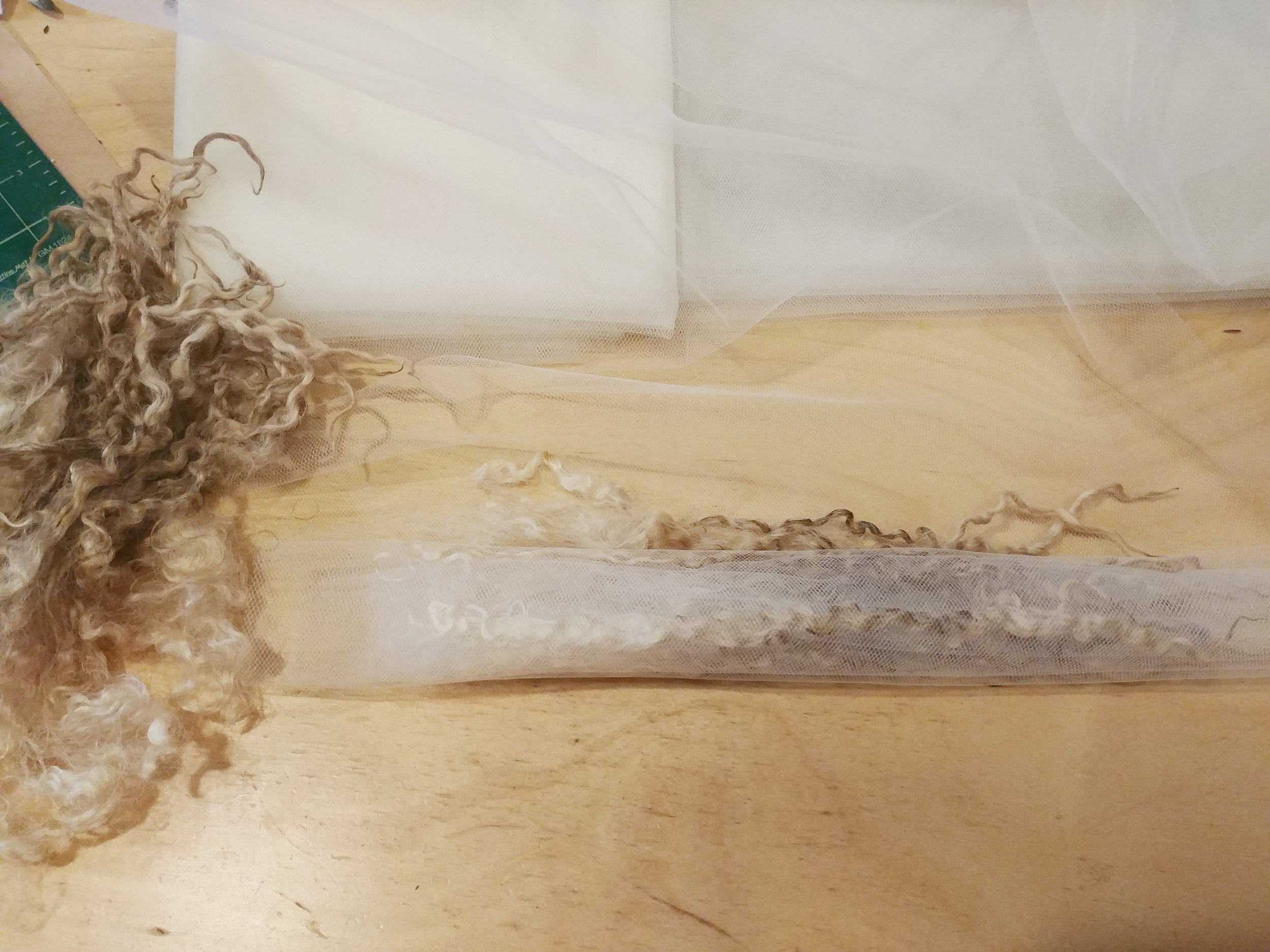 Process of rolling teeswater locks in a long sheet of tulle into bundles, one lock after the next with an inch or two of space between locks.