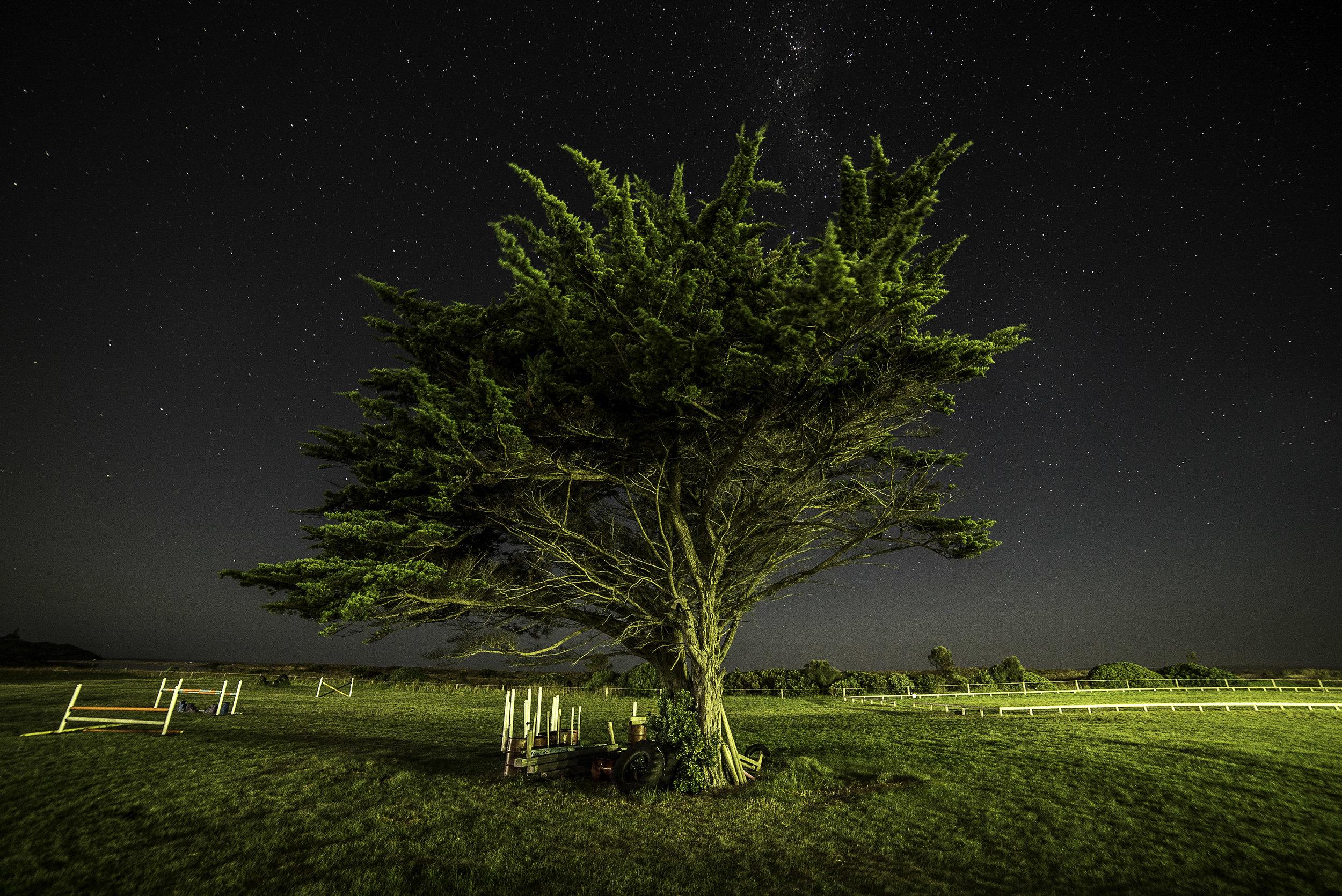 night tree (1 of 1).jpg
