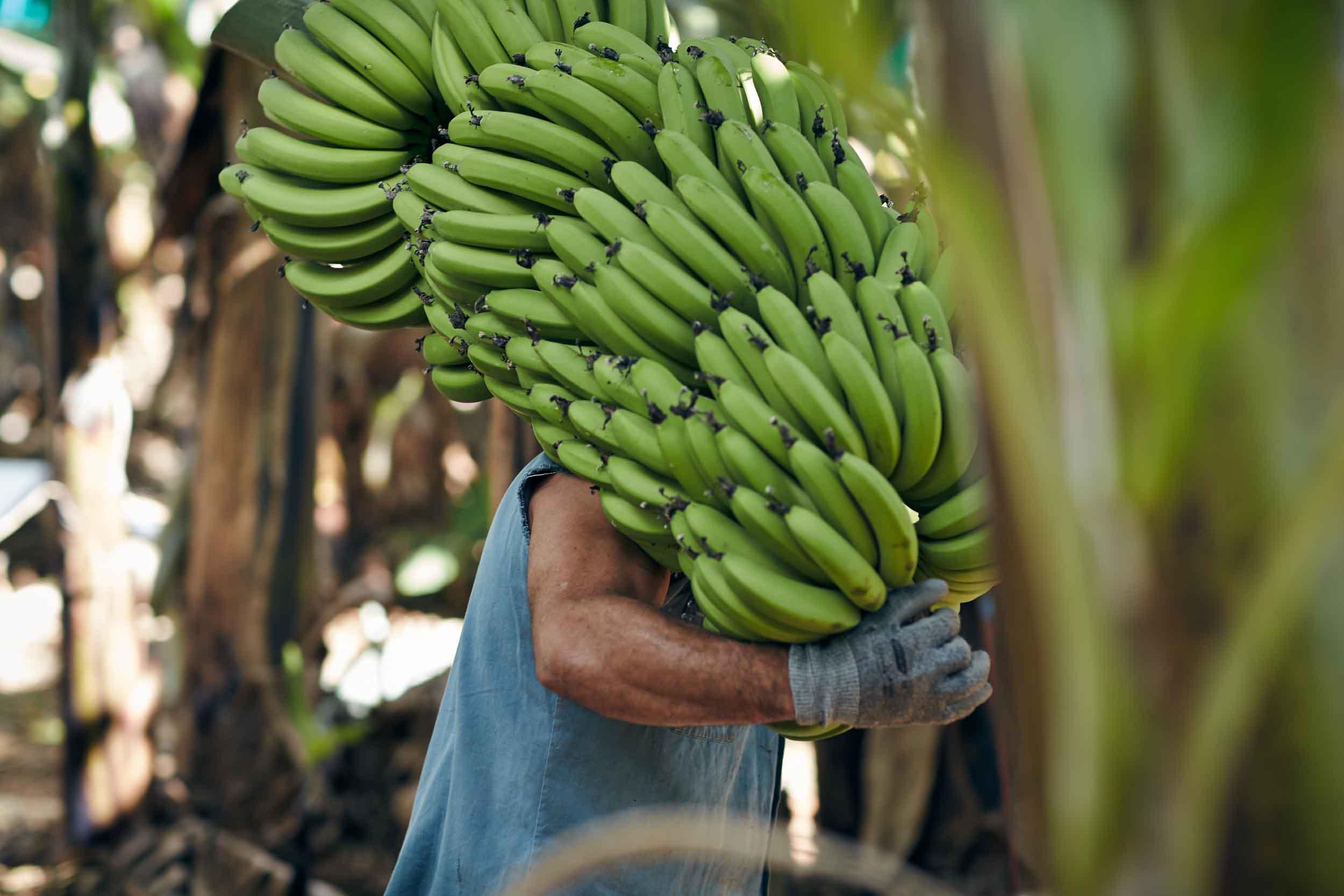 Bananas_Cairns_Portraits_Location_0036-2.jpg