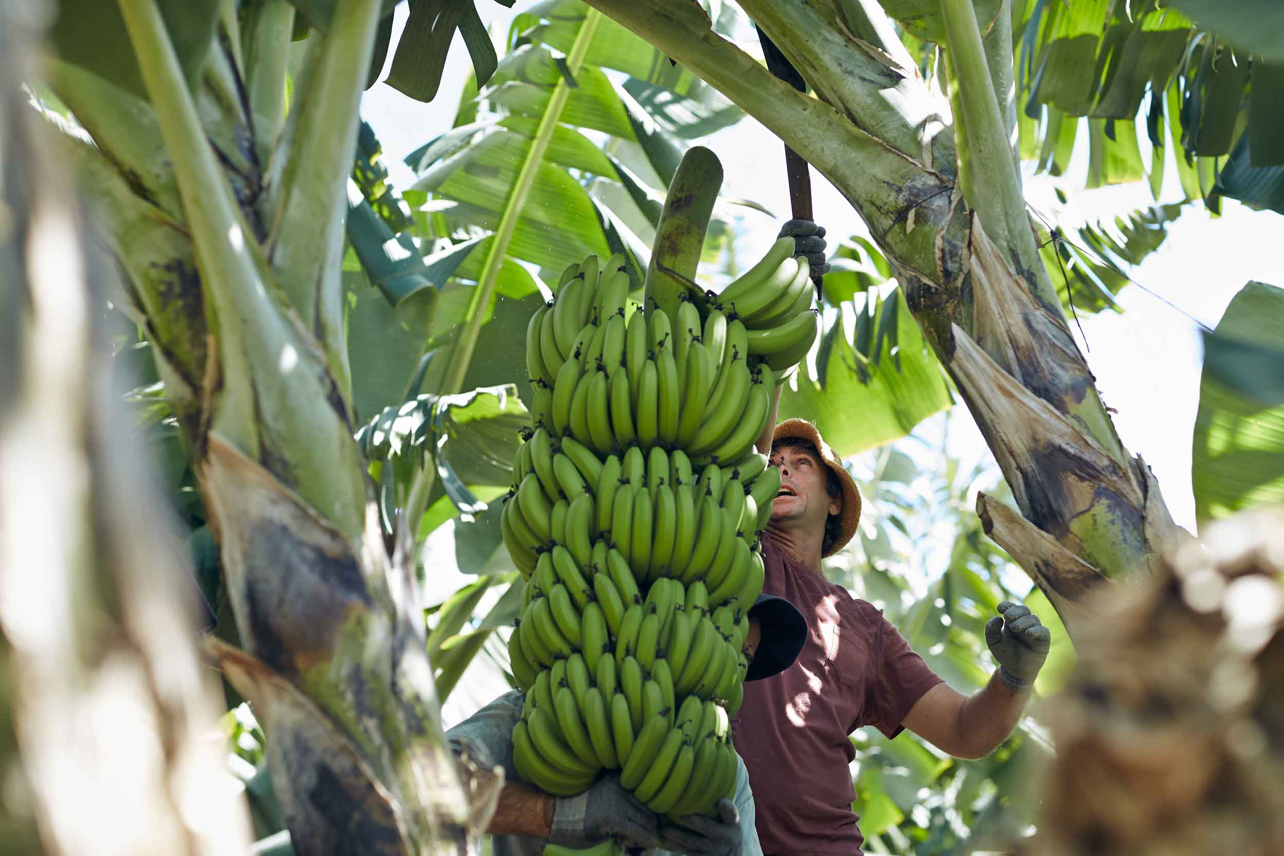 Bananas_Cairns_Portraits_Location_0333-2.jpg