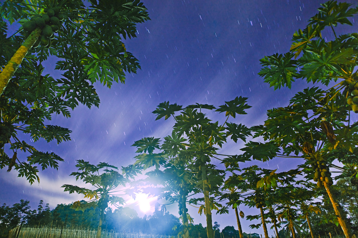 Above: I spent weeks camping out in Malaysia on farms, interviewing farmers about their own struggles -- growing and figuring out how to make it. Papaya trees sway in the moonlight while star trails and clouds move across the sky over the campsite.