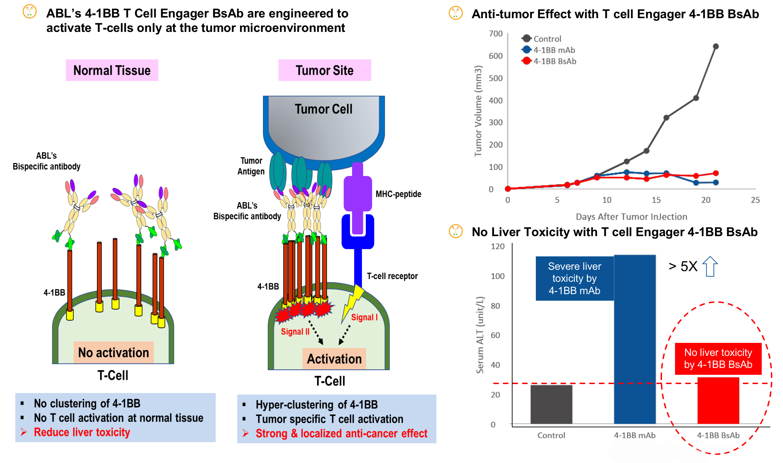 anti tumor effect.jpg