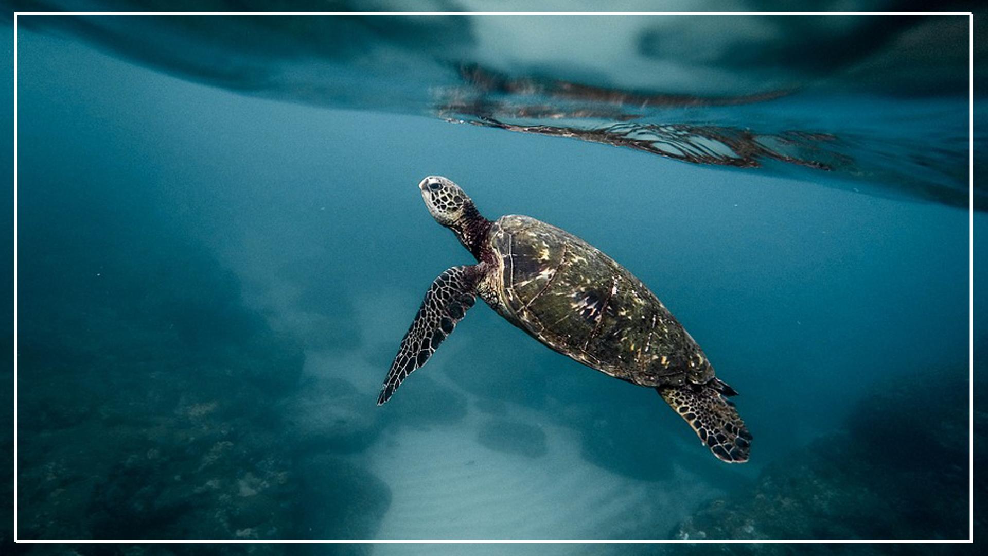 Turtle Gili island