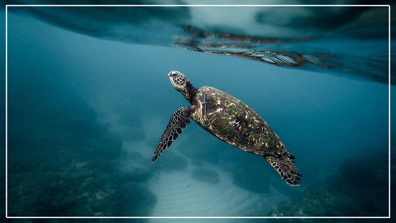 turtle-sanctury-gili-meno.jpg