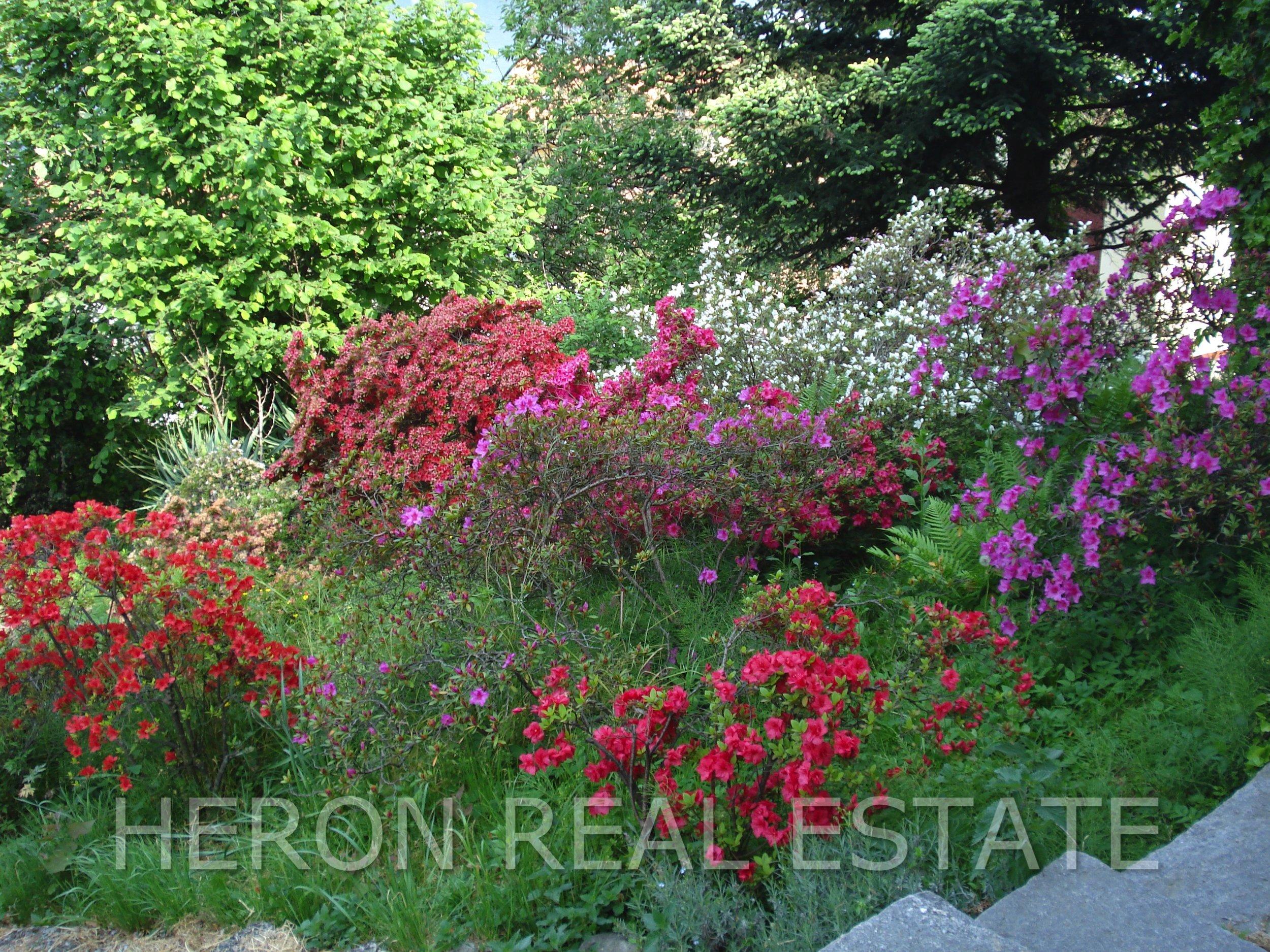 15 garden with azaleas.jpg