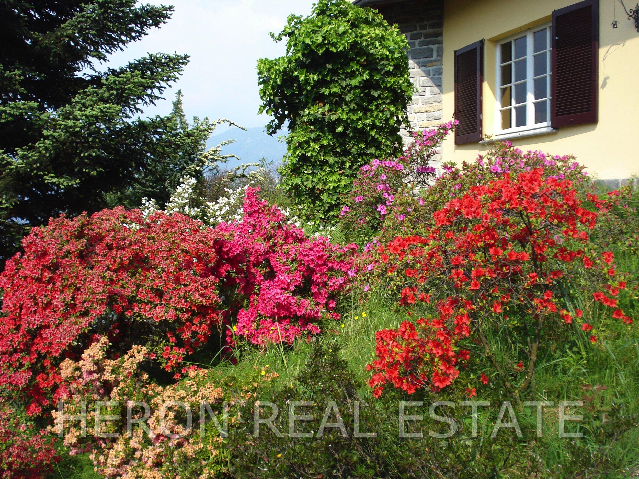 17 lush garden.jpg