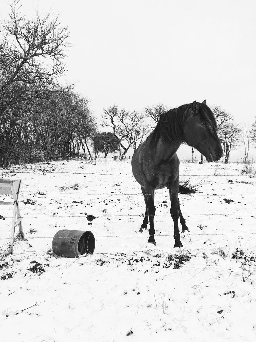 Horse, Vosges