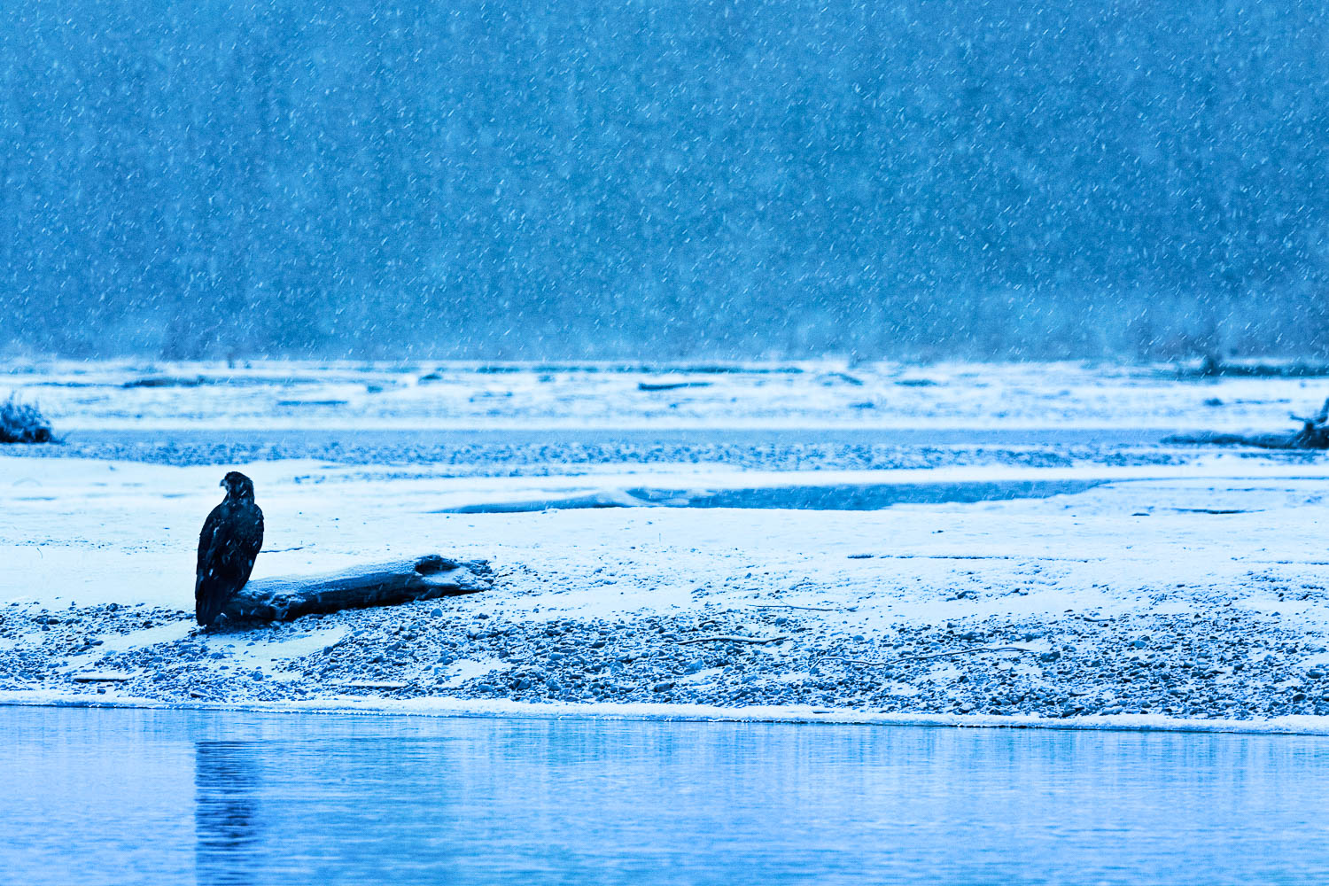 "Image Title: ""Eagle in Snowfall"""