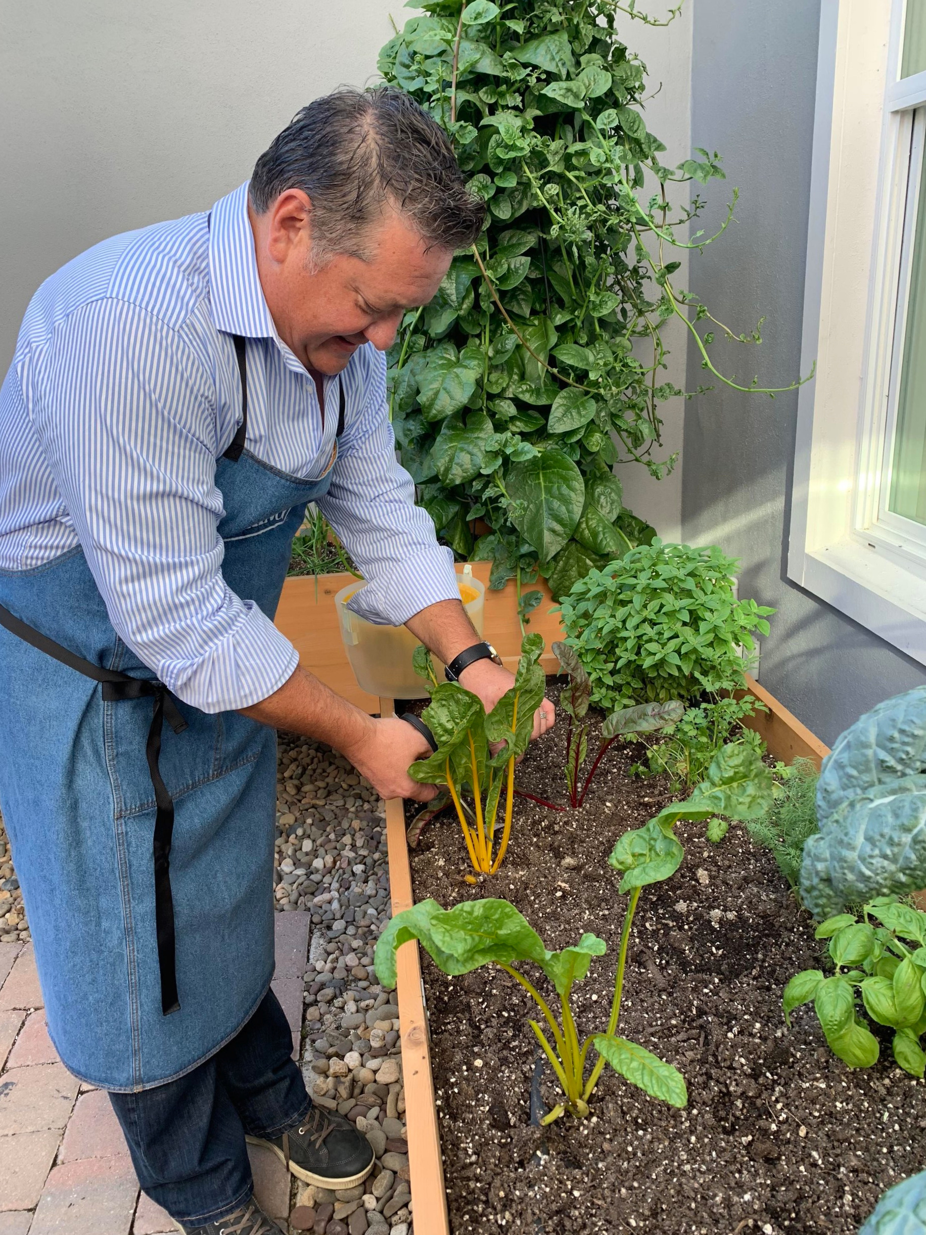 Chef Andy from Fueling Performance Athletes harvesting produce from the garden for a plant-based cooking workshop
