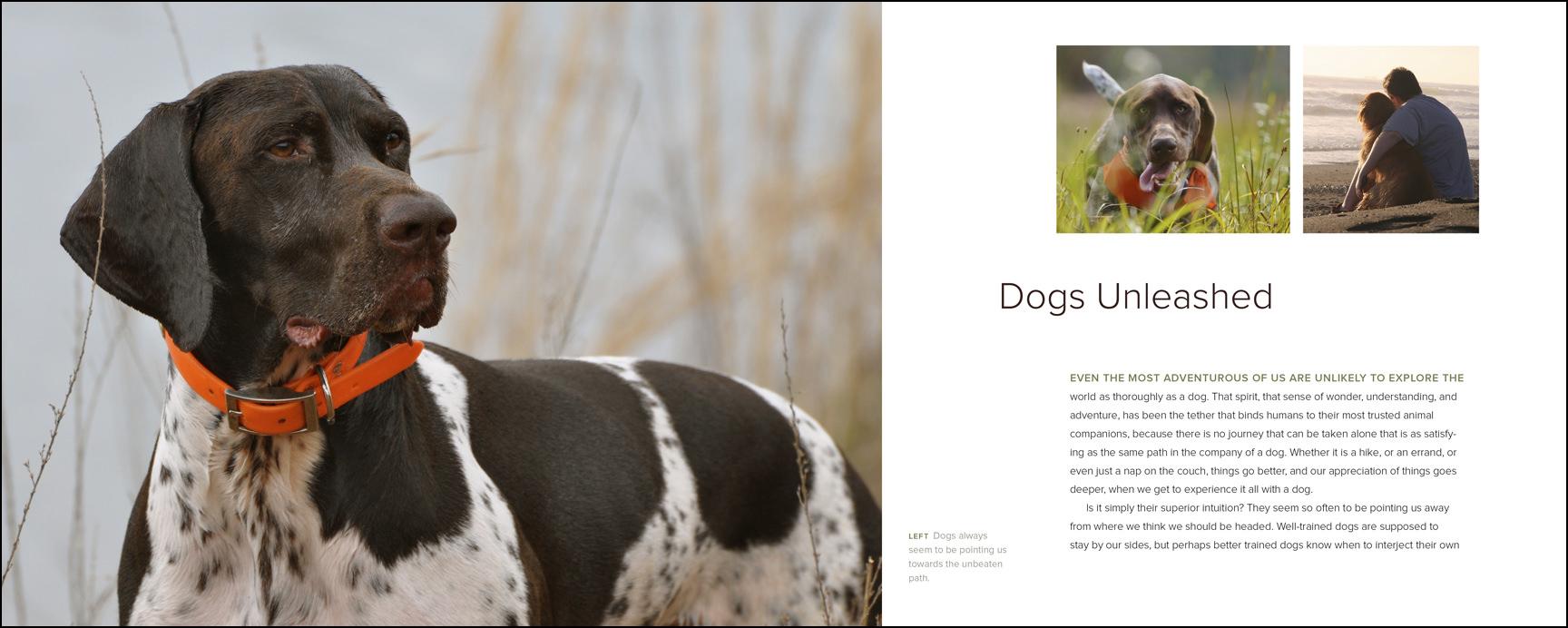 CH1_Dogs_Spread_SSp.jpg