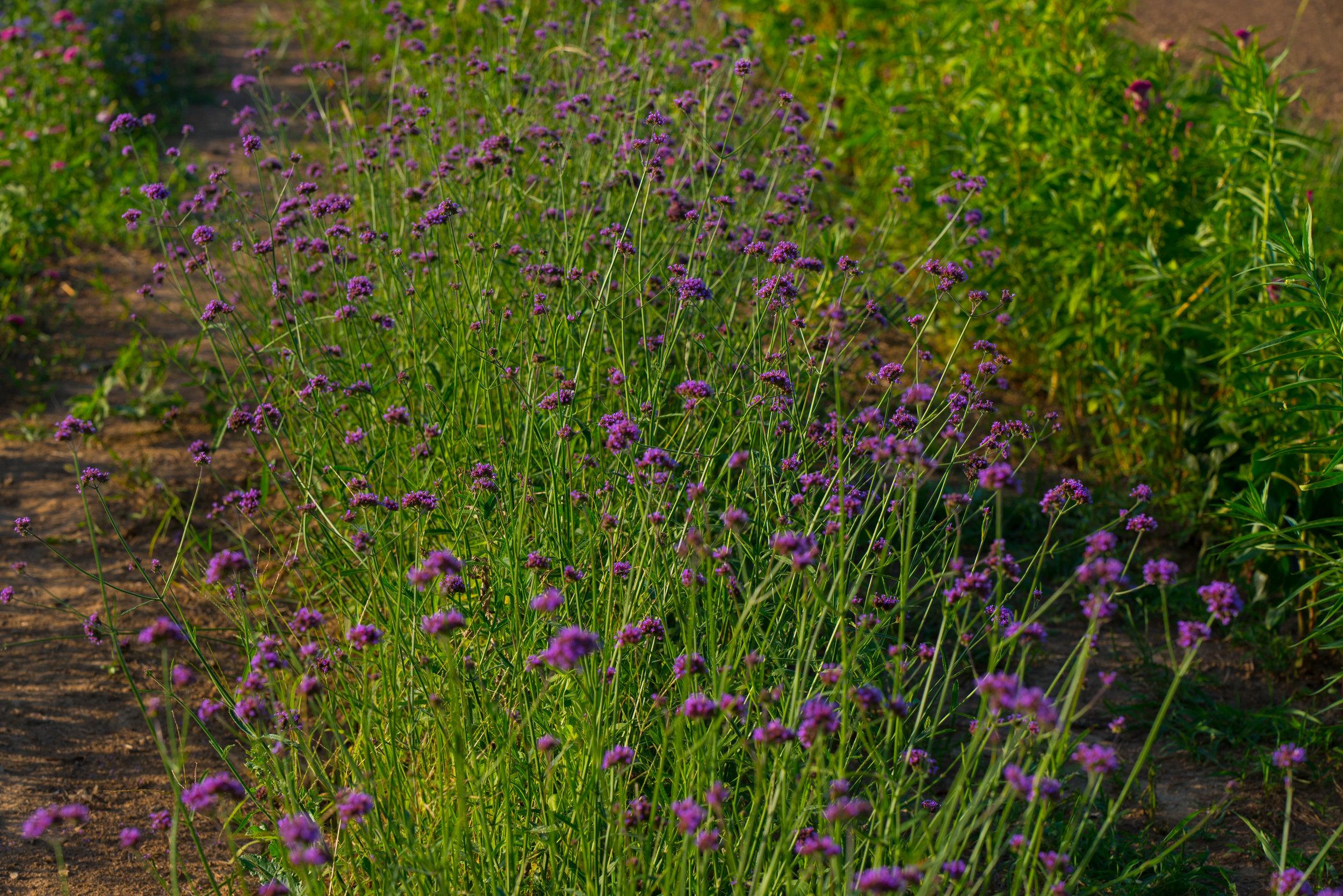 pure pollen_-16.jpg