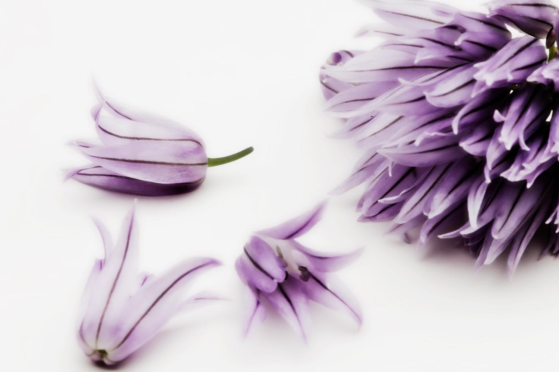 Chiveflowers.jpg