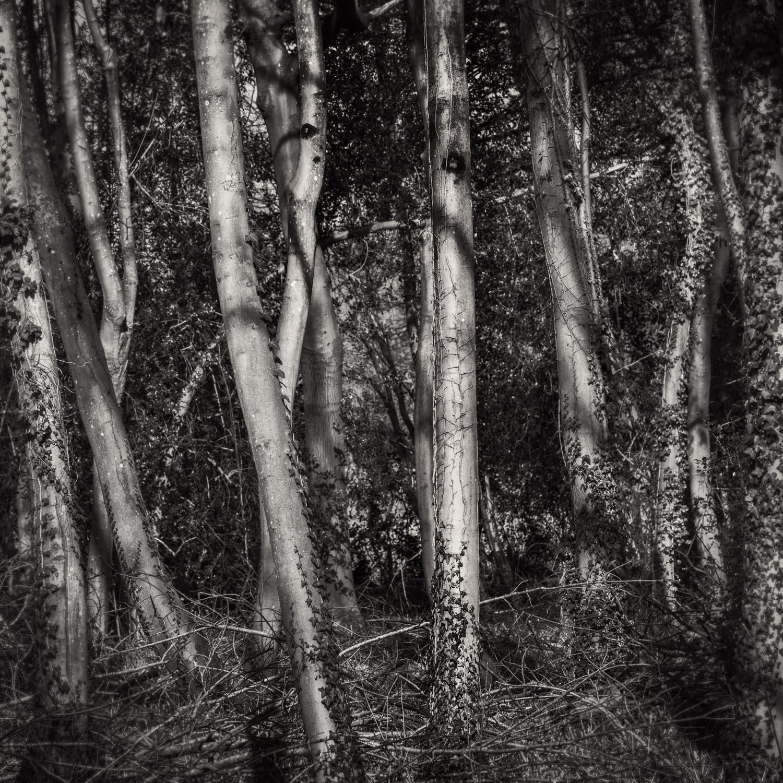 Monochrome wood