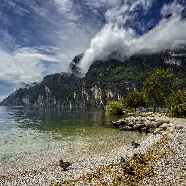 Lake Garda ducks