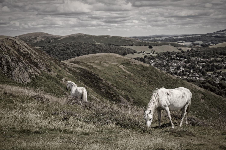 Long Mynd Horses One