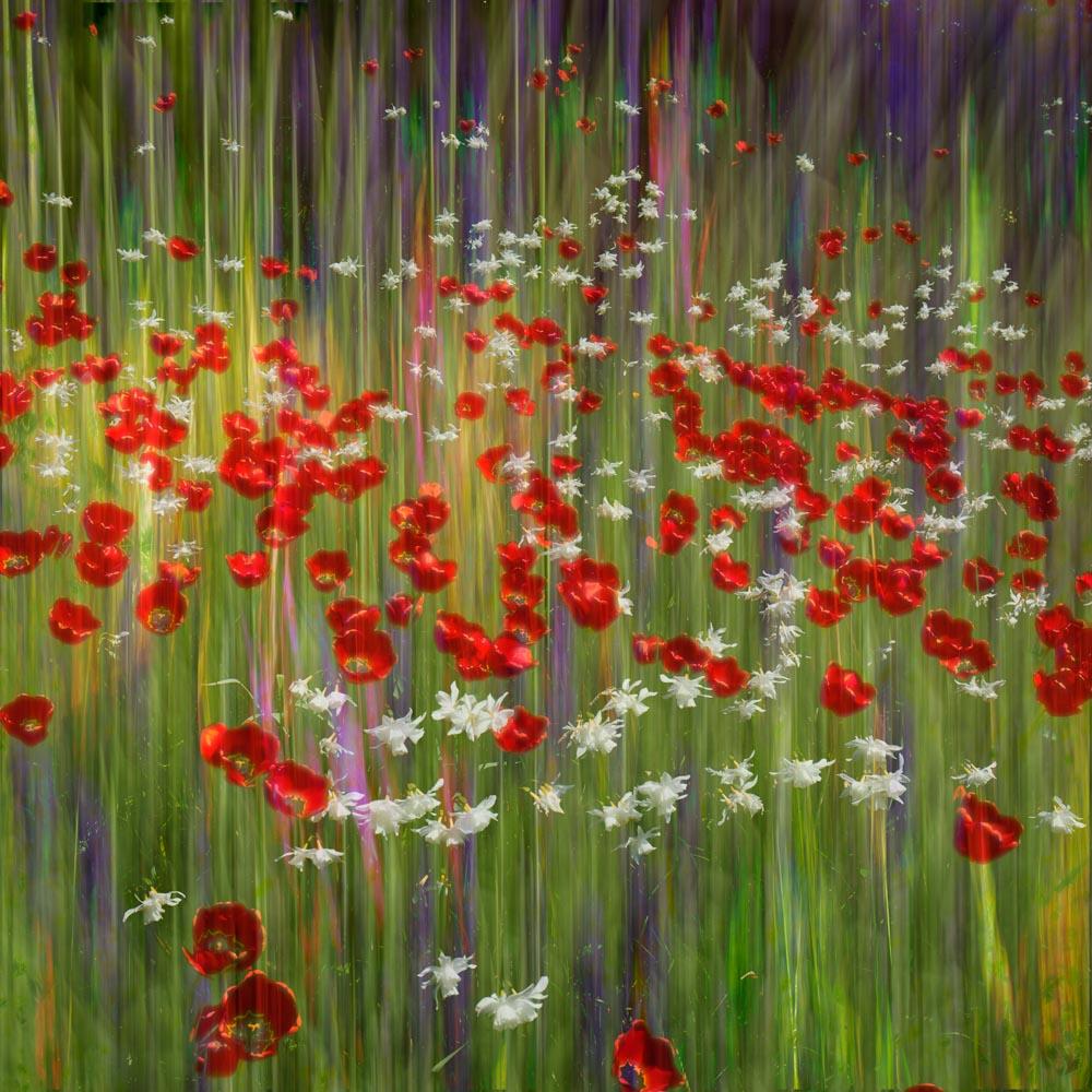 Floral dreams © Greg Vivash