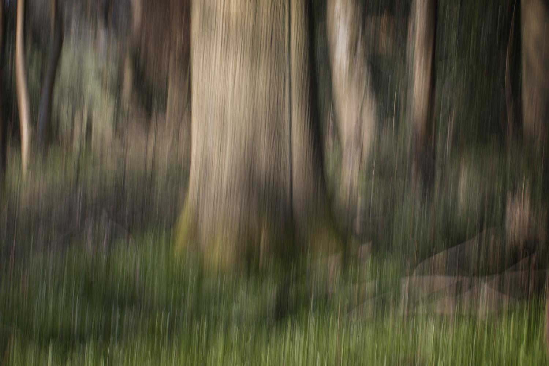 Tree dreams 2