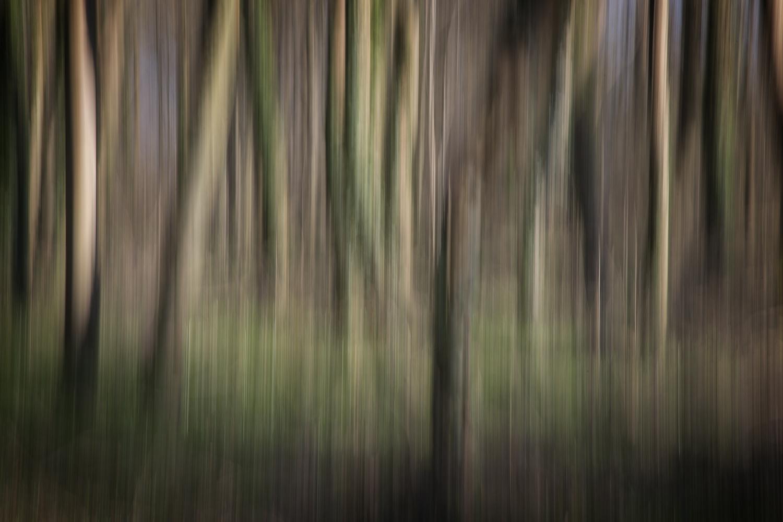 Tree dreams 1