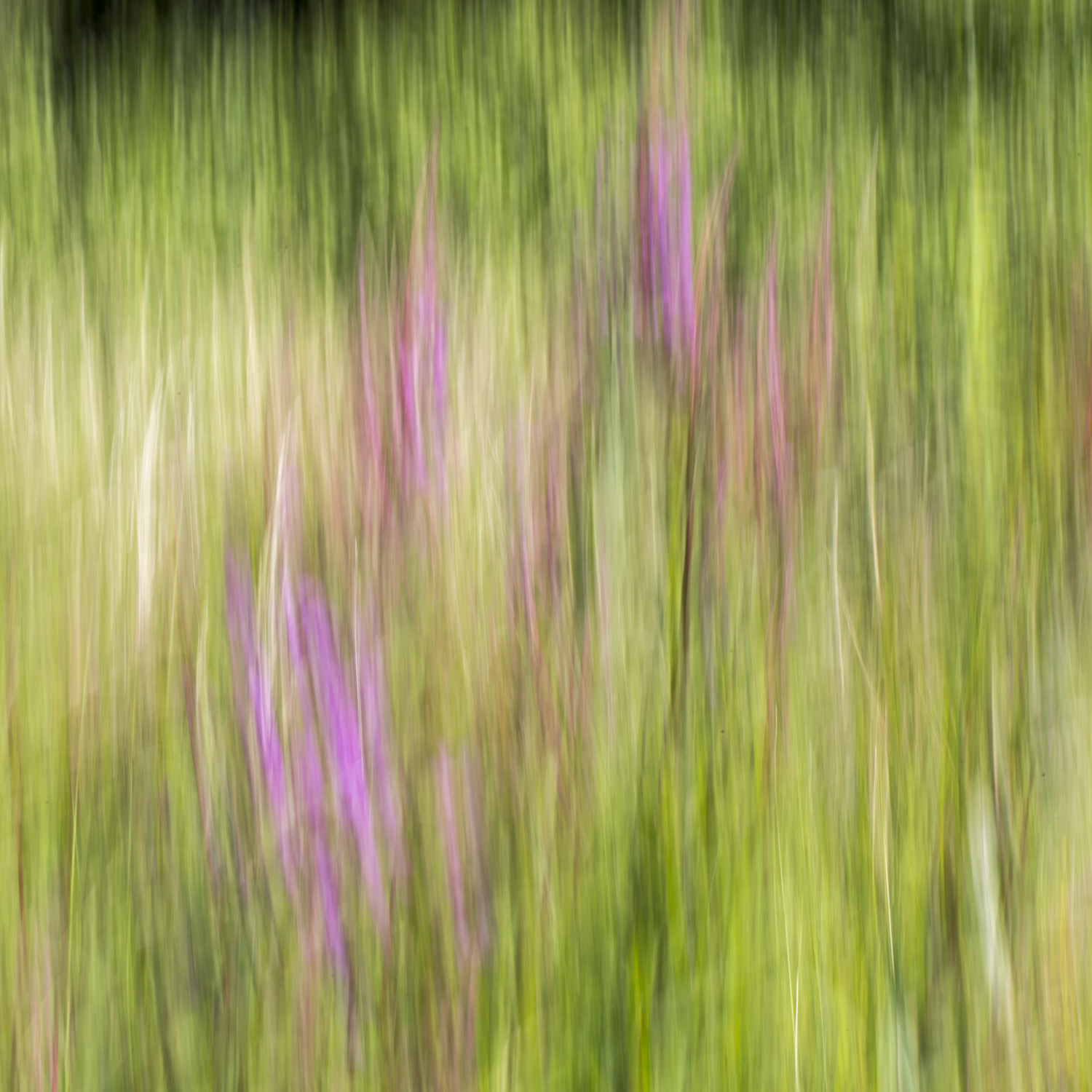 Wildflower and long grass
