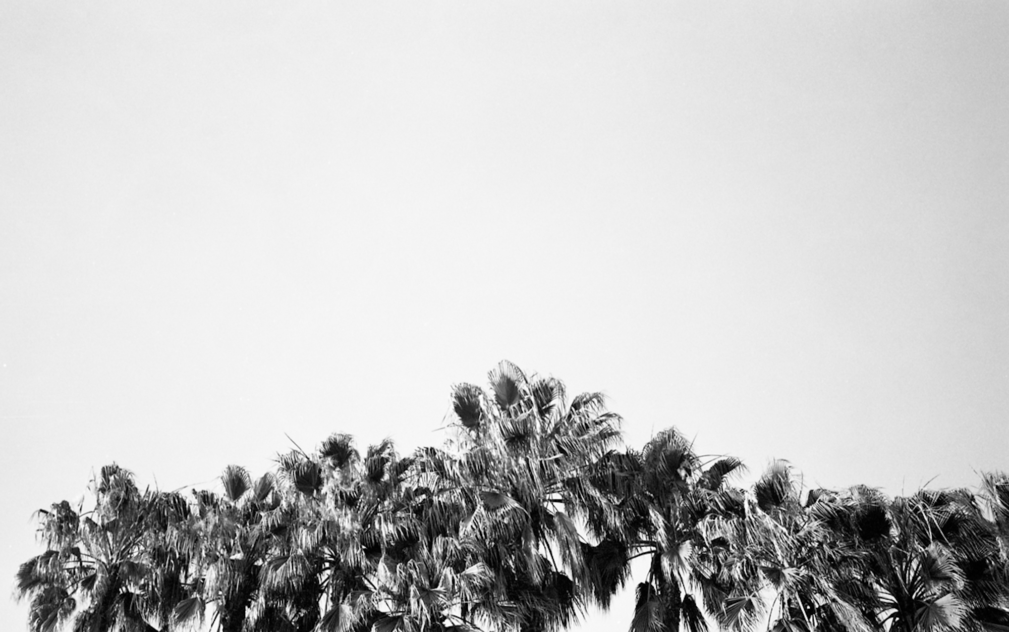 Palm Trees, Los Angeles 2008 - Kate Sterlin