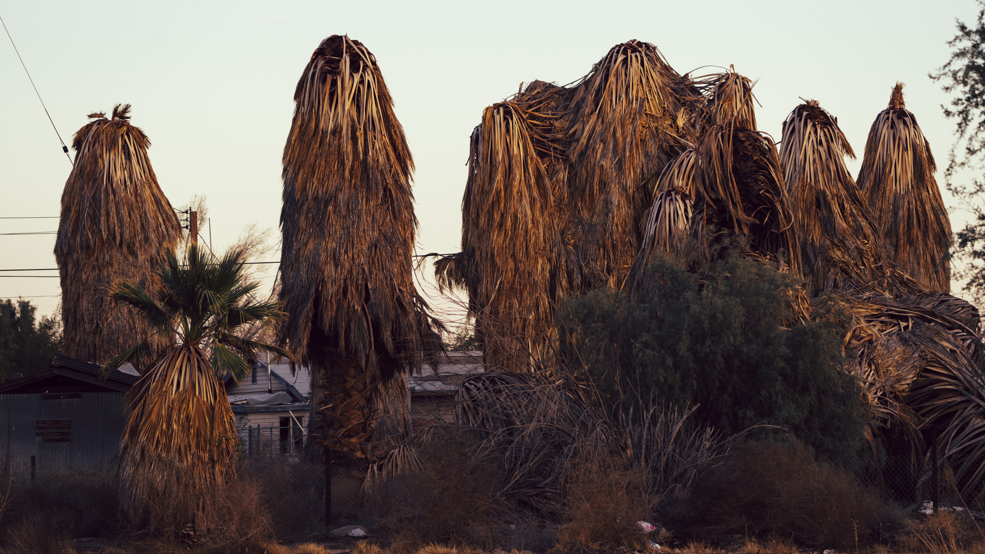 Slab City, CA 2018 - Taliesin Gilkes-Bower