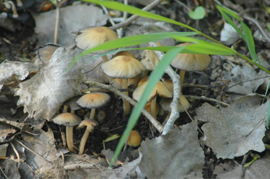 Teaneck Creek Conservancy Mushroom caps .jpg