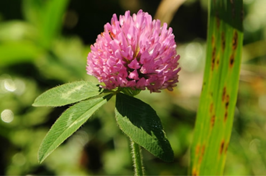 Teaneck Creek Conservancy Purple Flower.jpg