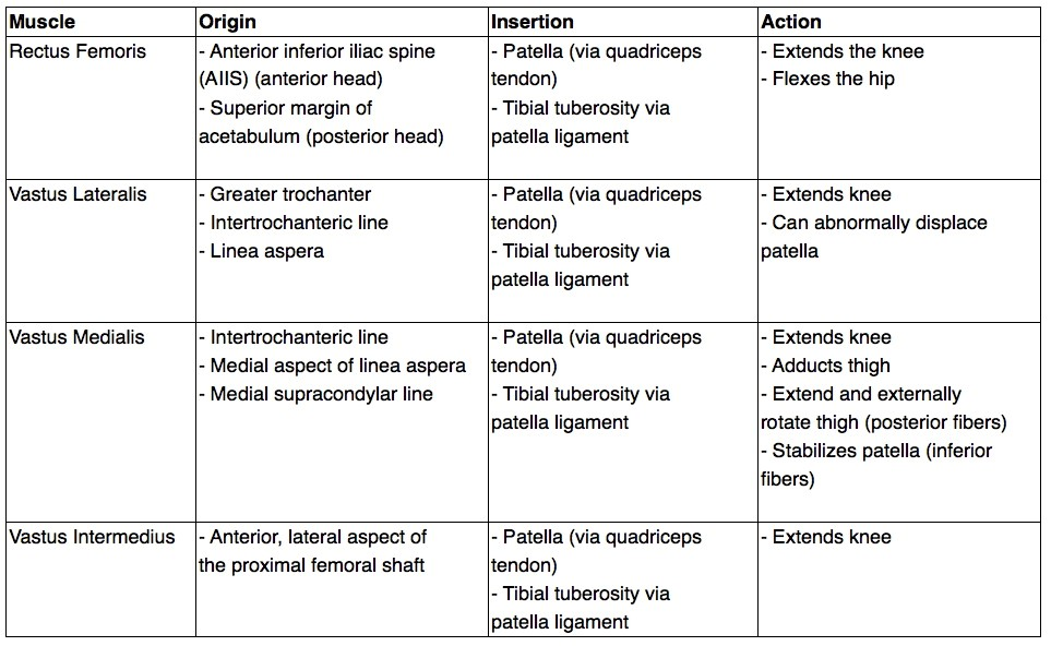 Breaking down what each of the quadriceps by origin, insertion, and action.