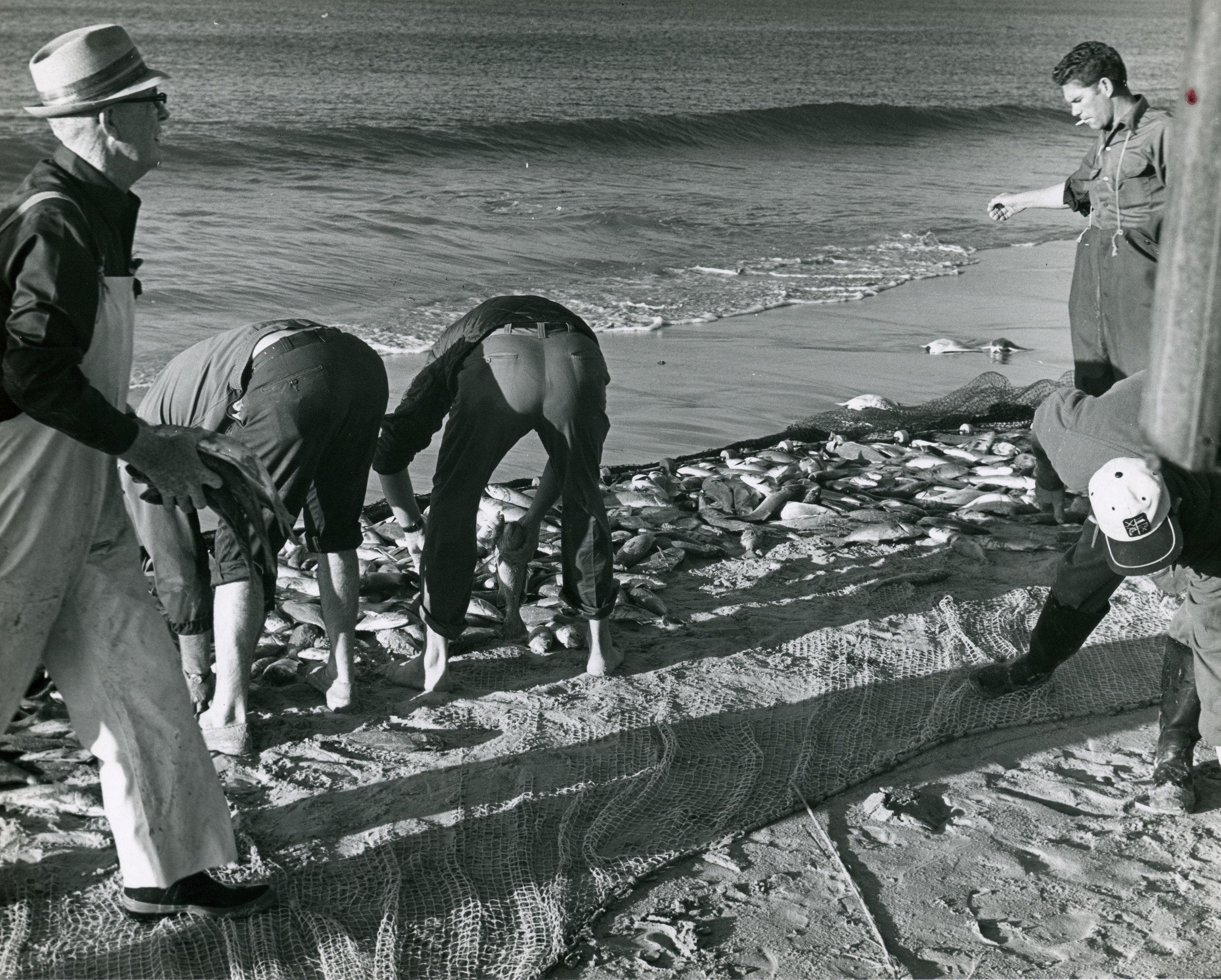 Salter Path beach seine mullet fishermen, 1940s