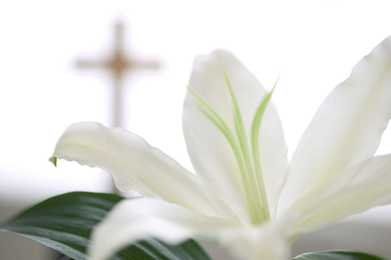 easter-lily-with-cross.png