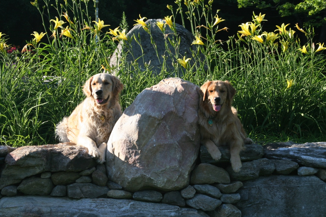 Cooper and Abby, the happy dogs of Happy Dog Farm