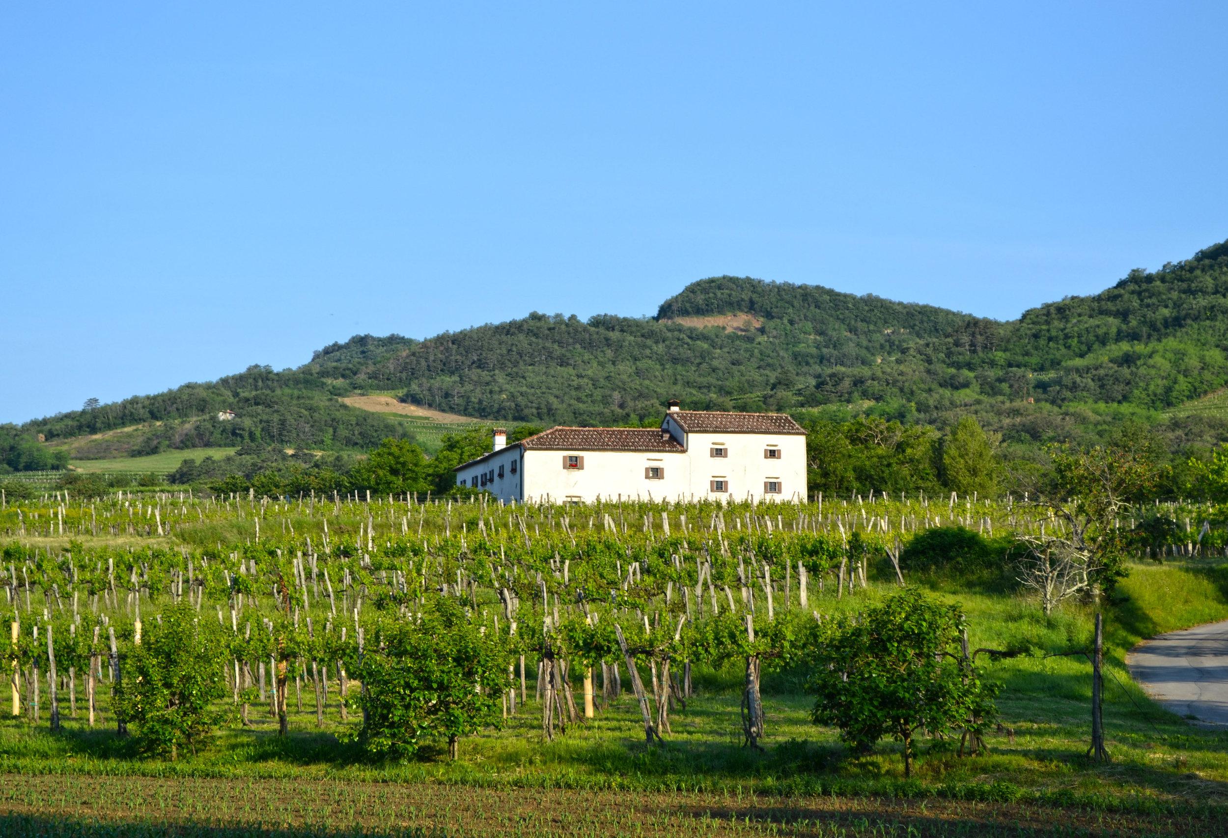 house in vineyard.jpg