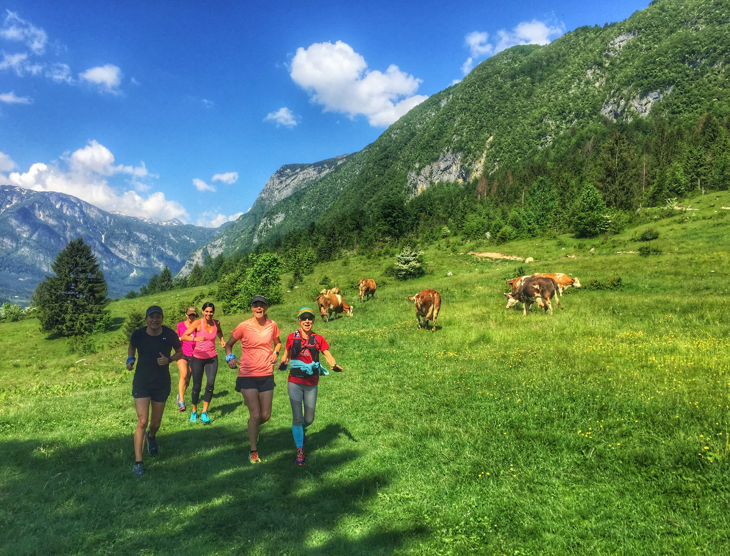 cow run.jpg