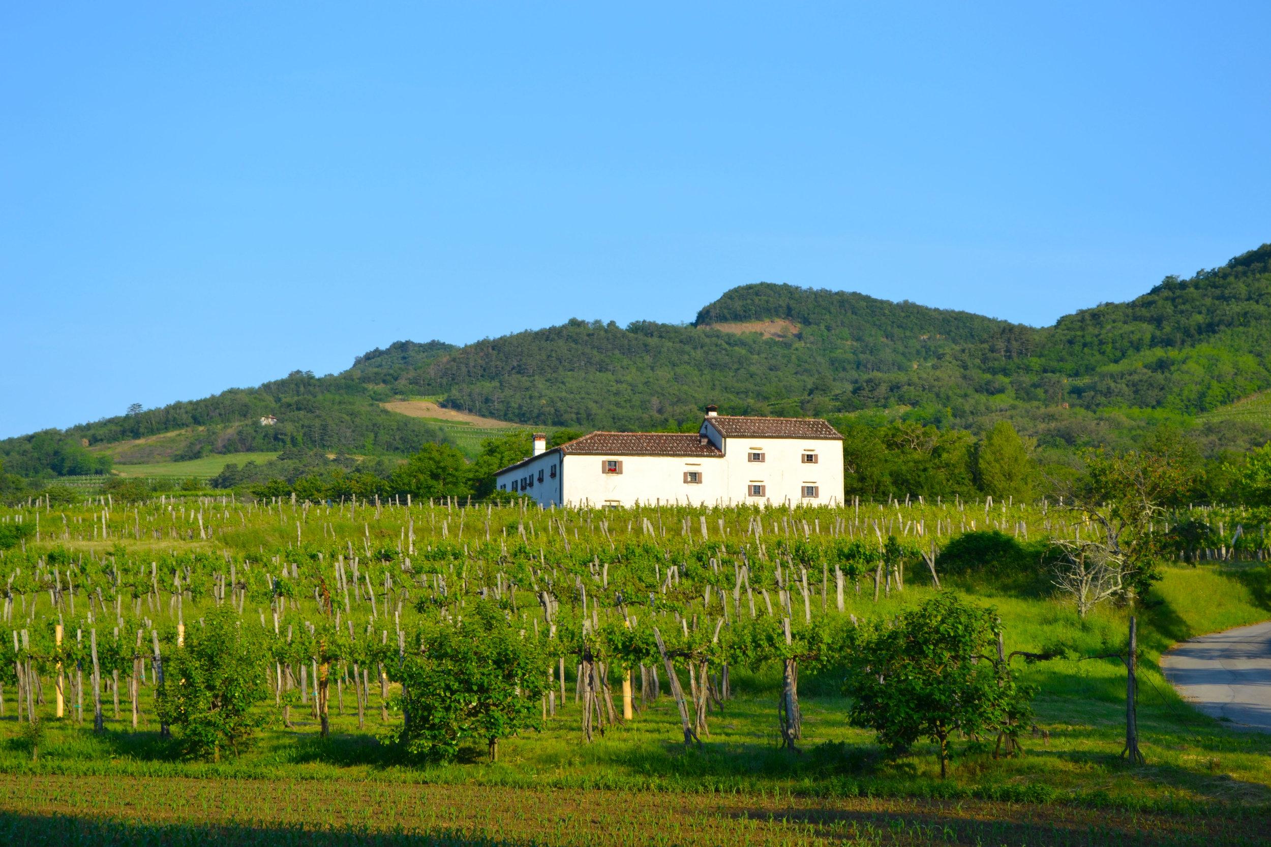 vineyard farmhouse.jpg