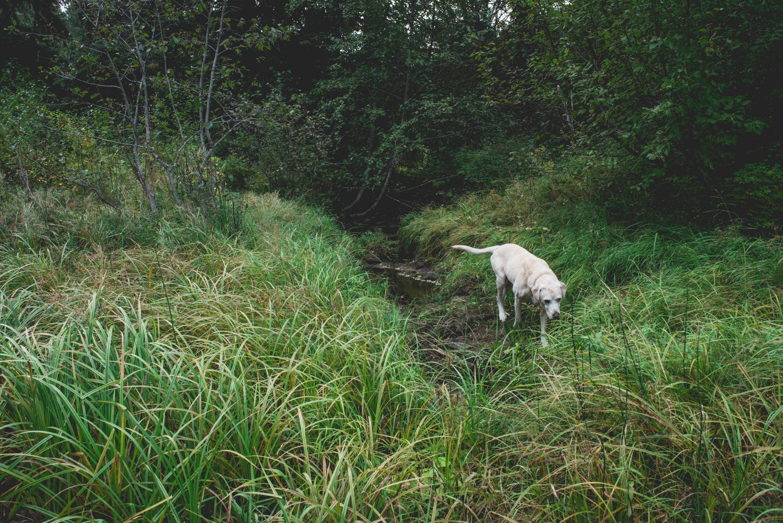Minam_River_Lodge_Wallowa_Mountains_Eagle_Cap_Wilderness_Oregon_Autumn_2017_Please_Credit_Talia_Jean_Galvin-89.jpg