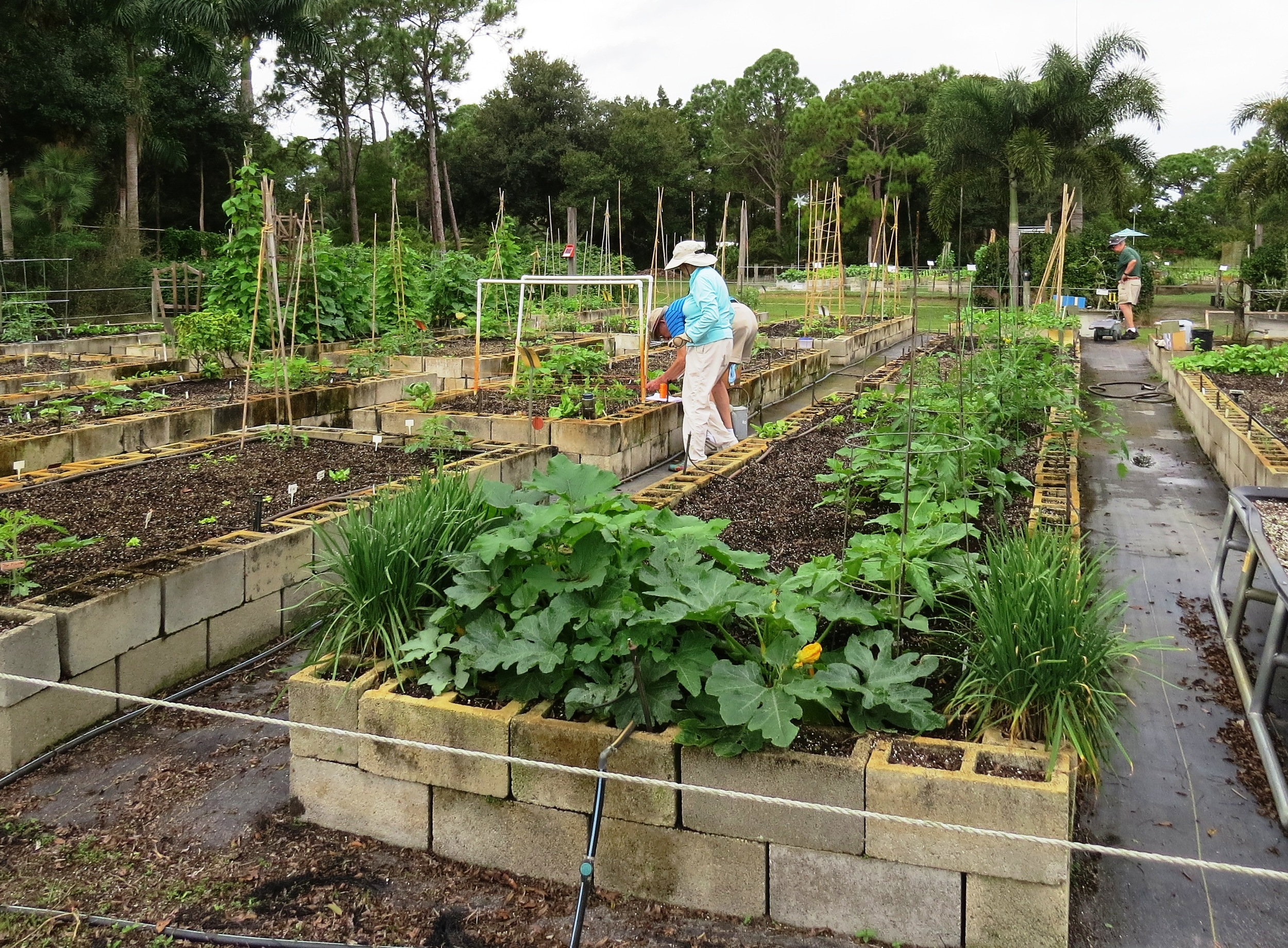 Shadowood gardeners busy planting their spaces in October of 2015