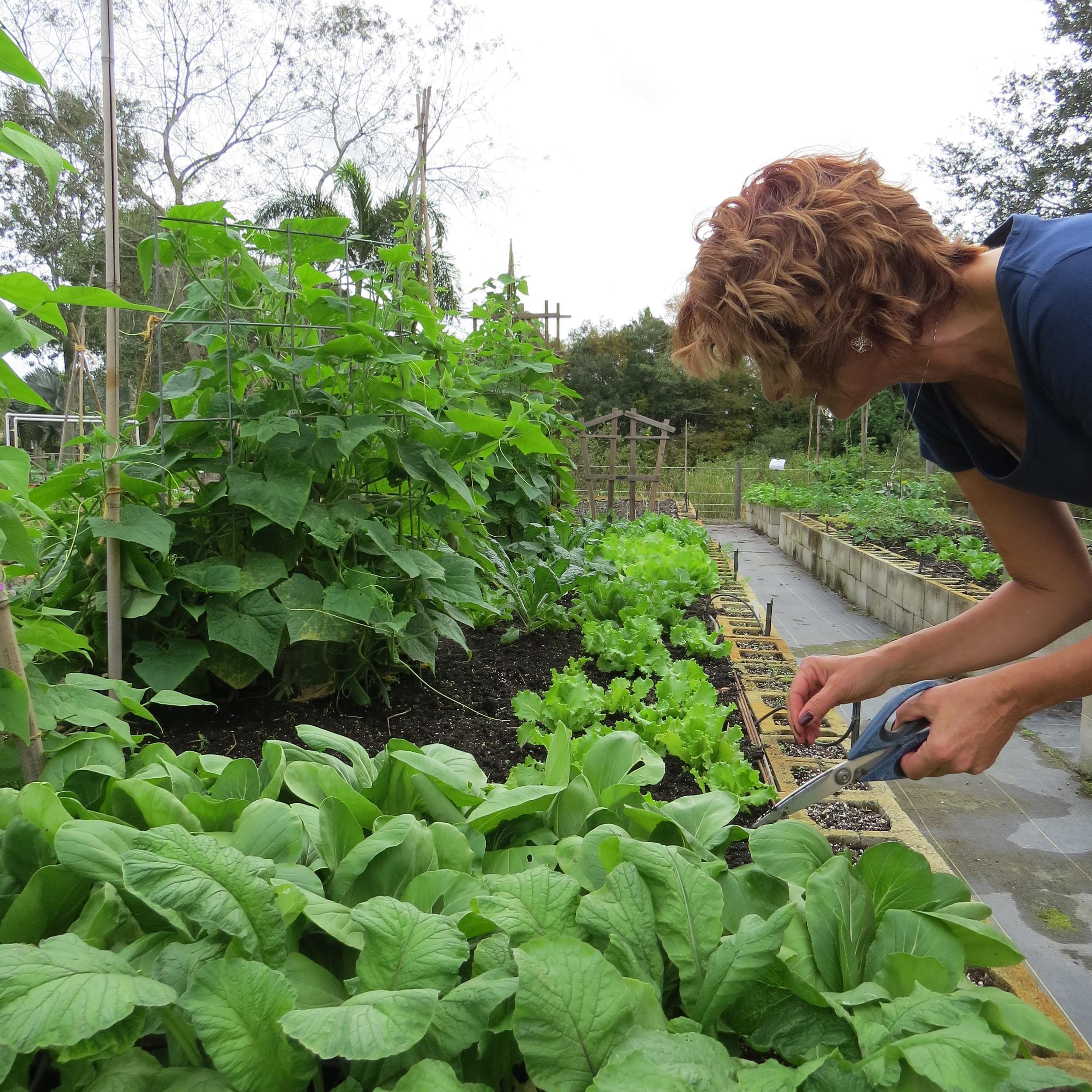 Cheryl tending to her garden in late October 2015